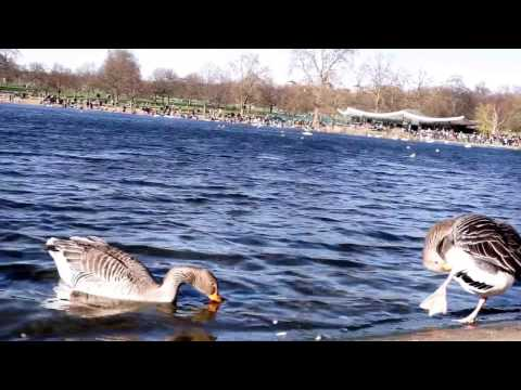 London- Green Park, Hyde Park 2017