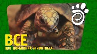 Условия Для Черепахи (Часть Вторая)Все О Домашних Животных