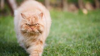 Смешные кошки видео приколы!Очень сердитые и злые!