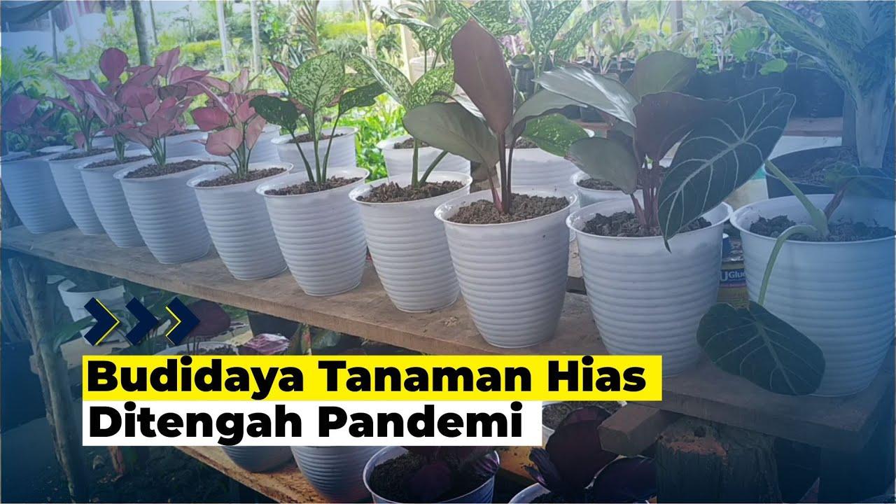 Pedagang Bunga Raup Untung Dimasa Pandemi