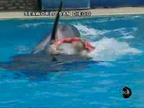 trainer at the sea world san diego put a camera on the