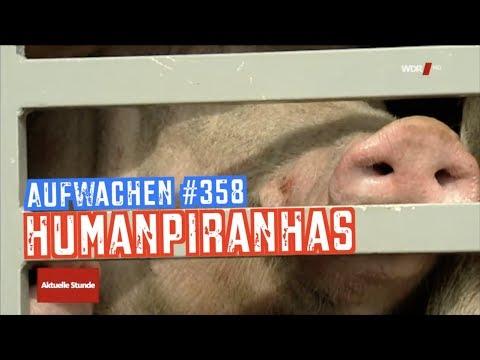 Aufwachen #358: Tierwohl-Label, Bayerns Bienen, Nord Stream 2 & der Wolf