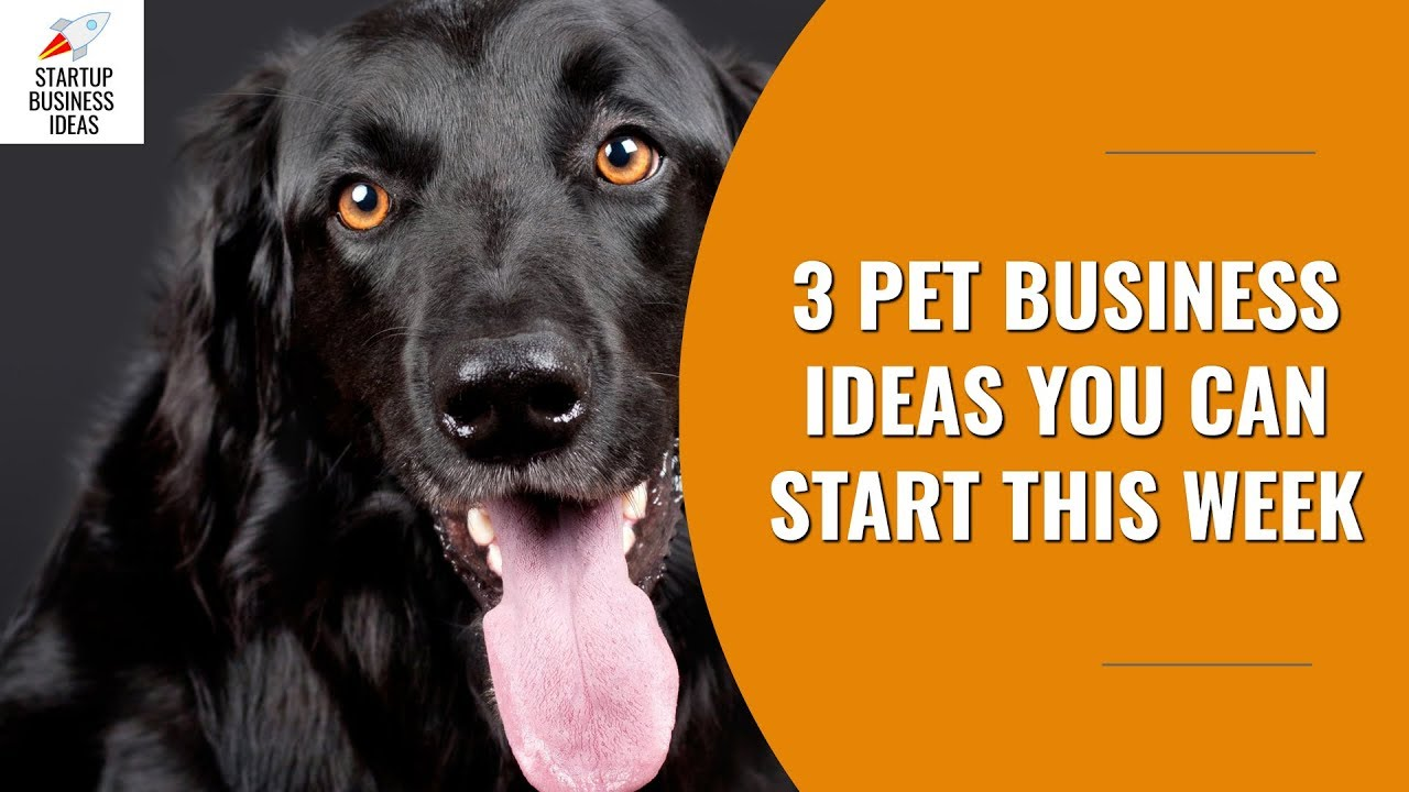 3 Pet Business Ideas You Can Start This Week