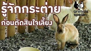 รู้จักกระต่ายก่อนตัดสินใจเลี้ยง : Animals Speak