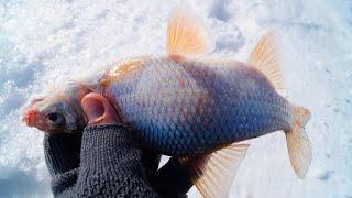 УЛОВИСТАЯ БЕЗМОТЫЛКА В ГЛУХОЗИМЬЕ! Рыбалка на ГВОЗДЕШАРИК .Ловля плотвы и окуня
