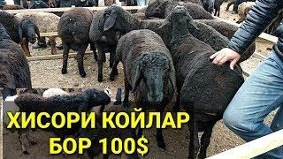 КОЙ БОЗОРИ НАРХЛАРИ 2019