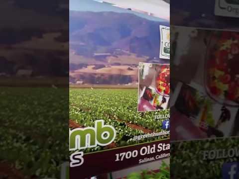 Girloy Farmers Market  (Green Thumbs Organics Farms )