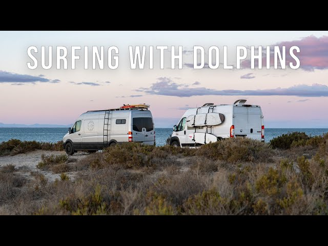 Surfing with Dolphins in Punta Abreojos - Van Life Mexico Episode 54