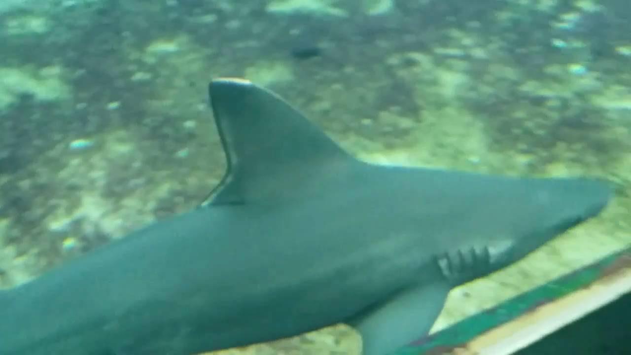 Kleine Haie