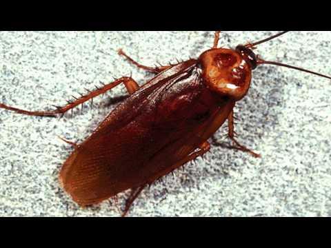 Как тараканы чувствуют еду