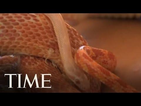 Slithering Masseurs In Israel  | TIME