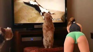 Супер Смешное видео ютуба! Приколы!Смех до Слёз!