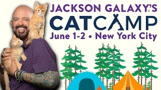 Cat Camp is coming to NYC!