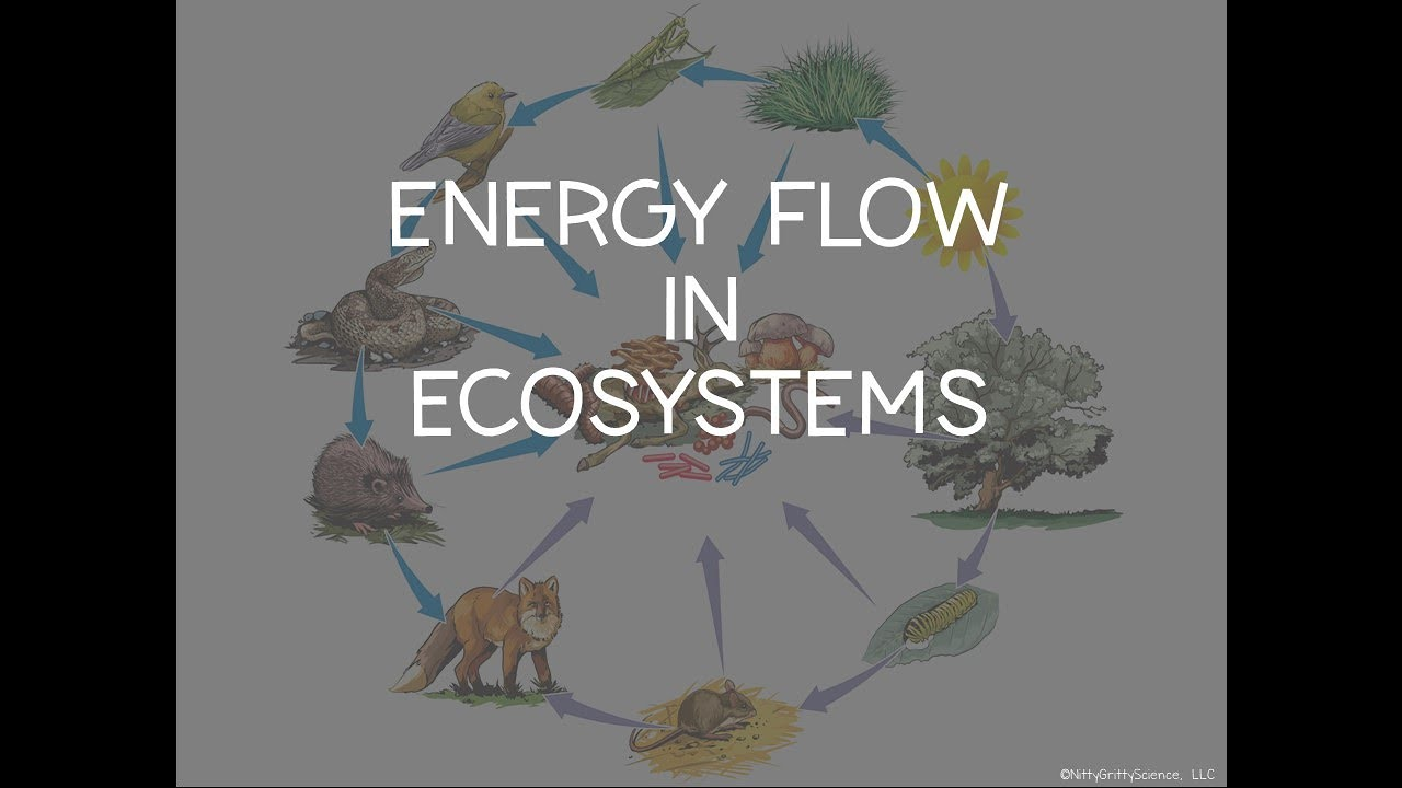 PRINCIPLES OF ECOLOGY - Section 2 Energy Flow In ...