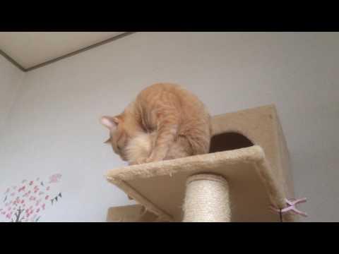 セルフメンテナンス中の猫『保護猫るる らら物語』