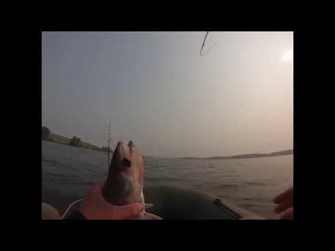 ловля судака на ириклинском водохранилище