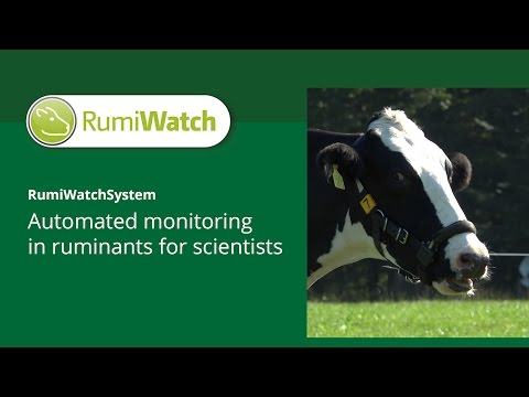 RumiWatch - The Grazing Movie