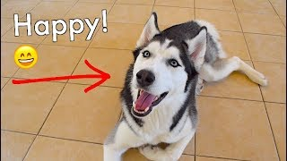 Do Dogs Feel Happiness?