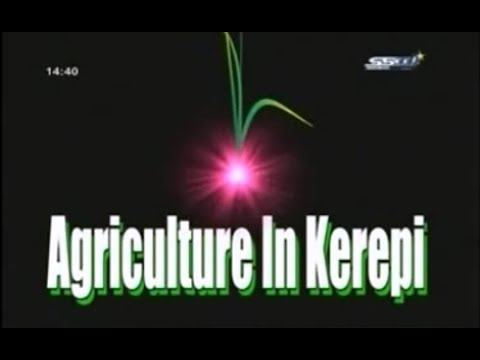 South Sudan - Agriculture In Kerepi