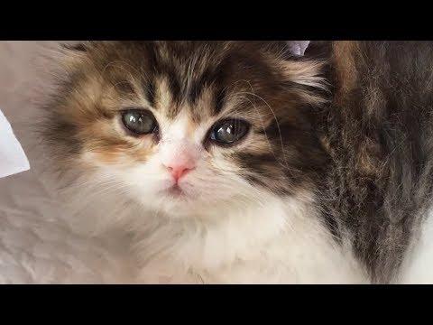 사랑할 수 밖에 없는 아기 개냥이 고양이의 매력