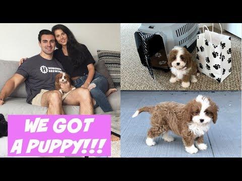 WE GOT A PUPPY CAVAPOO!!!