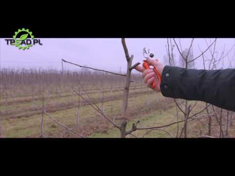 Pruning apple trees. - Gra o Plon S01E01 - English version
