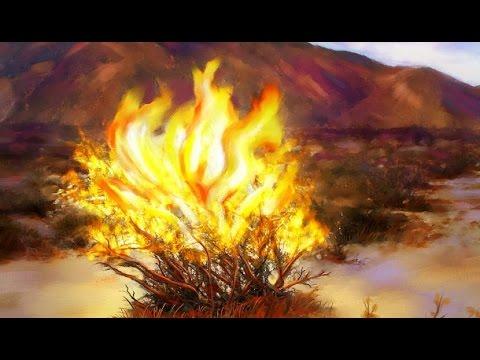 The Burning Bush - Graveyards on FIRE - YouTube