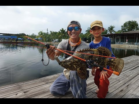 Rod-breaking Groupers At Fishing Buddies, KL, Malaysia