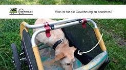 Die Gewöhnung an den Hundeanhänger