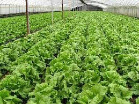 Organic Farming Techniques & Methods Documentary