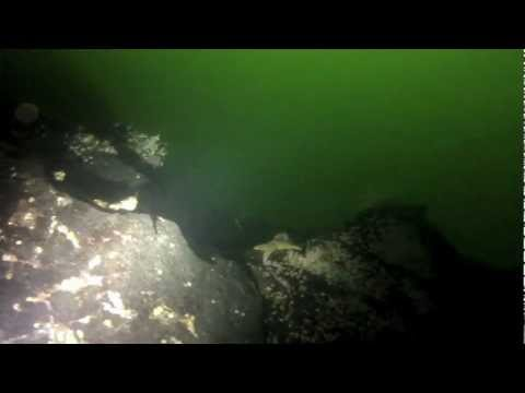 Dykking i Trondheimsfjorden