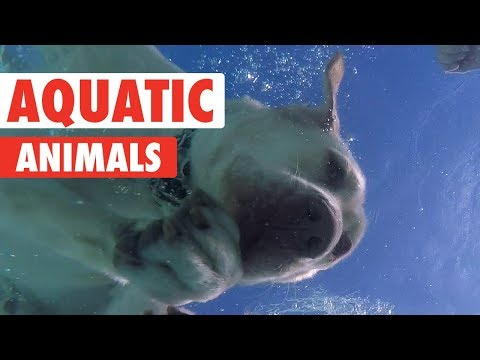 Animals Who Love Water | Aquatic Animals