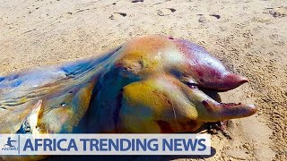 Mysterious Creature Washes Up on African Beach