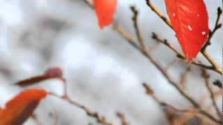 「君の季節」  OneFreeNine