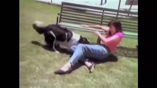 Download Video Ngintip Cewek dan Anjing, Girl and Dog MP3 3GP MP4