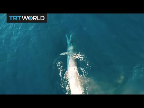 Insight: The Whaling Ban