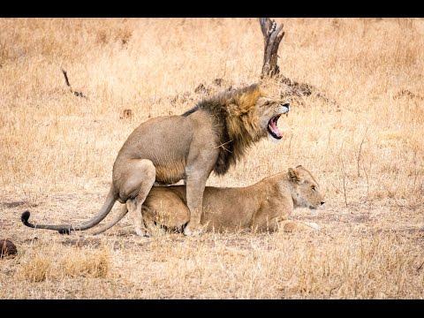 15 days Kenya and Tanzania African Wildlife Safari 2016 (Serengeti, Masai Mara, Ngorogoro)