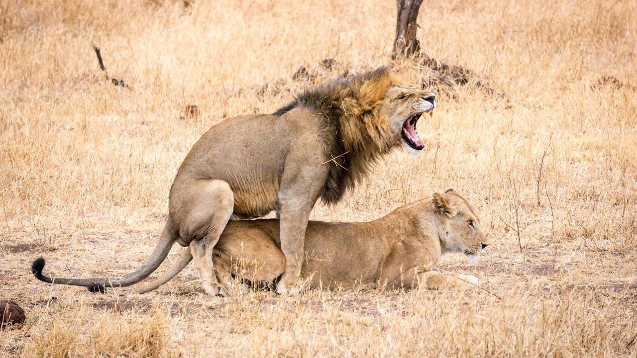 15 days Kenya and Tanzania African Wildlife Safari 2016 ...