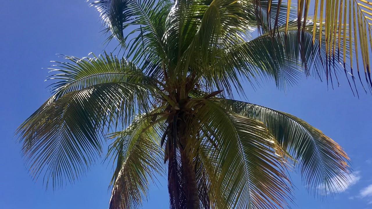Rundflug übers Paradies - Wasserflugzeug in Guadeloupe mit ULM (Trailer)