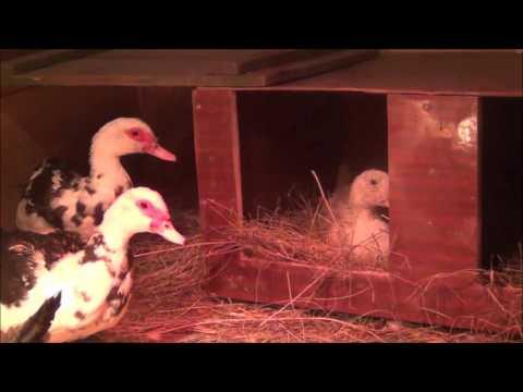 Как сделать гнездо для попугаев Как сделать гнездо своими руками