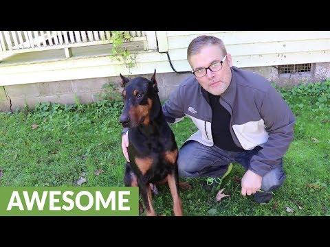 Doberman performs magic tricks with his owner