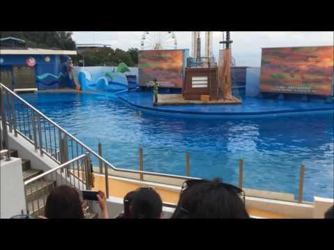 Hong Kong Ocean Park Dolphins show Vacation 2016