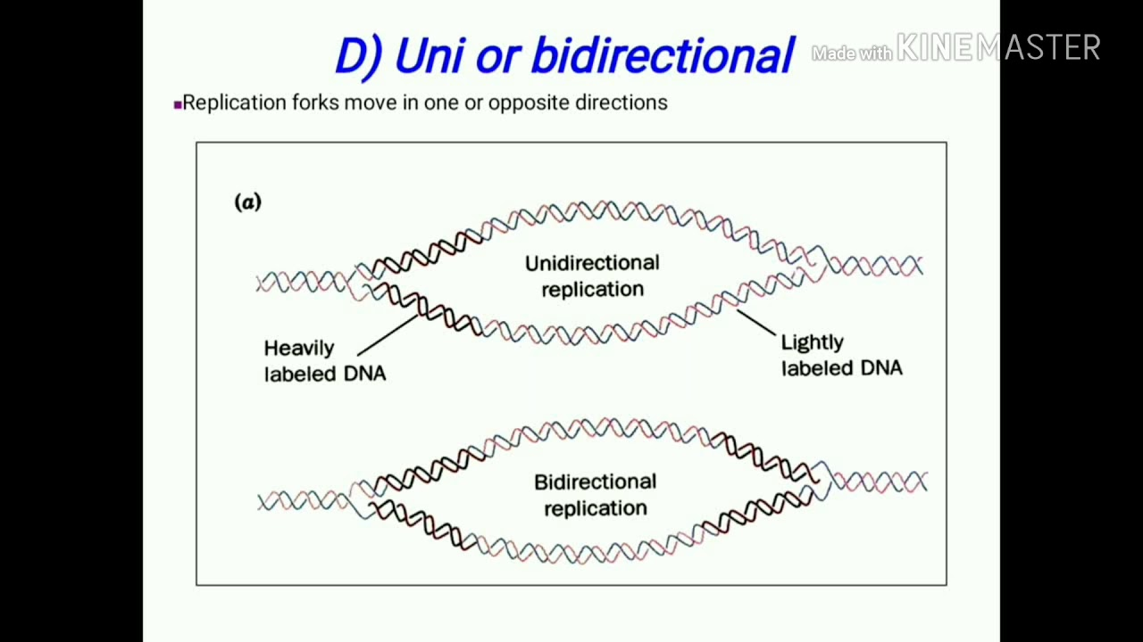 Dna Replication Easy To Understand Youtube