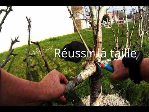 Taille d 39 un poirier couvert de boutons fleurs 1 youtube for Taille d un albizia