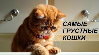 Самые грустные кошки