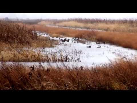 MI DNR Managed Waterfowl Hunt Area: Harsens Island