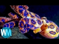 watch he video of Top 10 Terrifyingly Deadly Sea Creatures