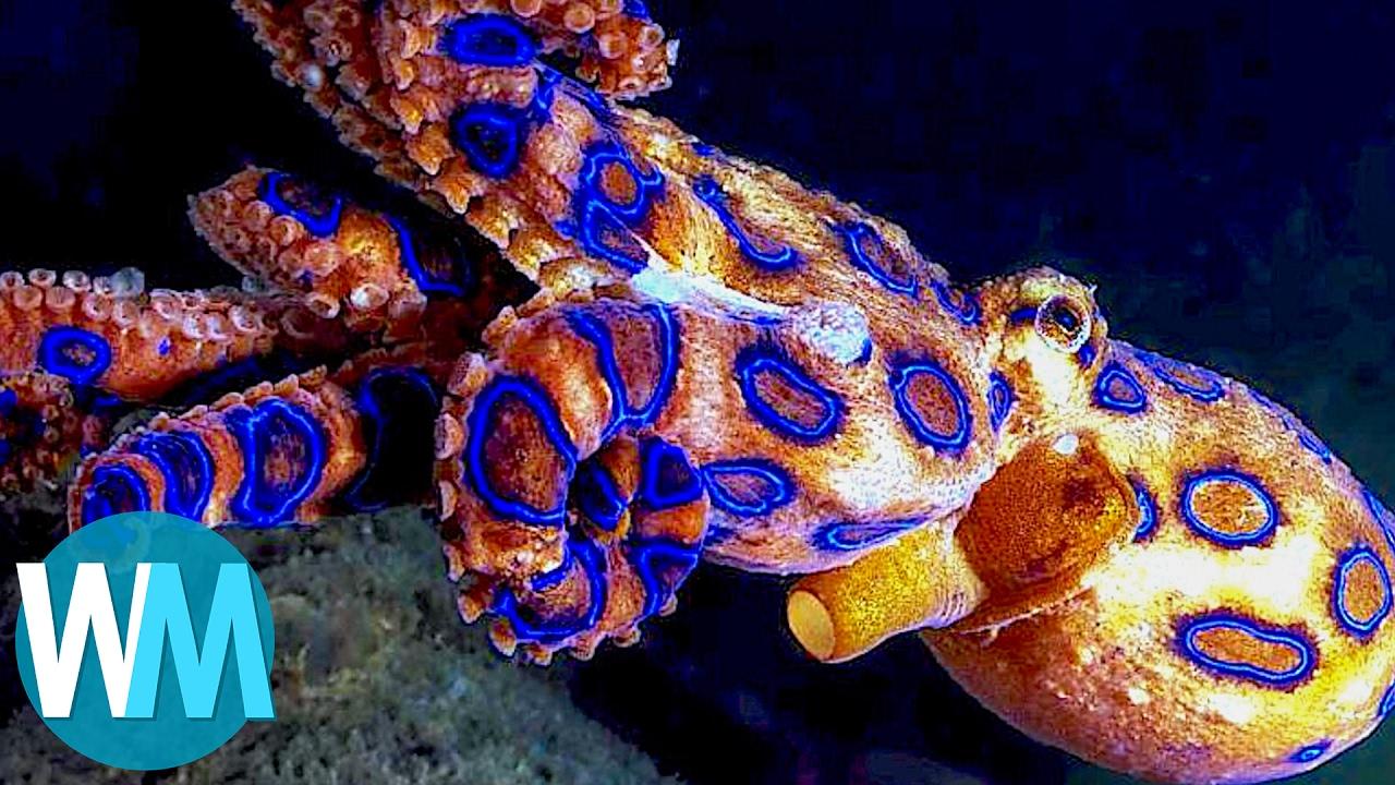 Sea creatures. Dangerous sea animals - photo 41