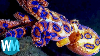 Download Top 10 Terrifyingly Deadly Sea Creatures Mp3 and Videos