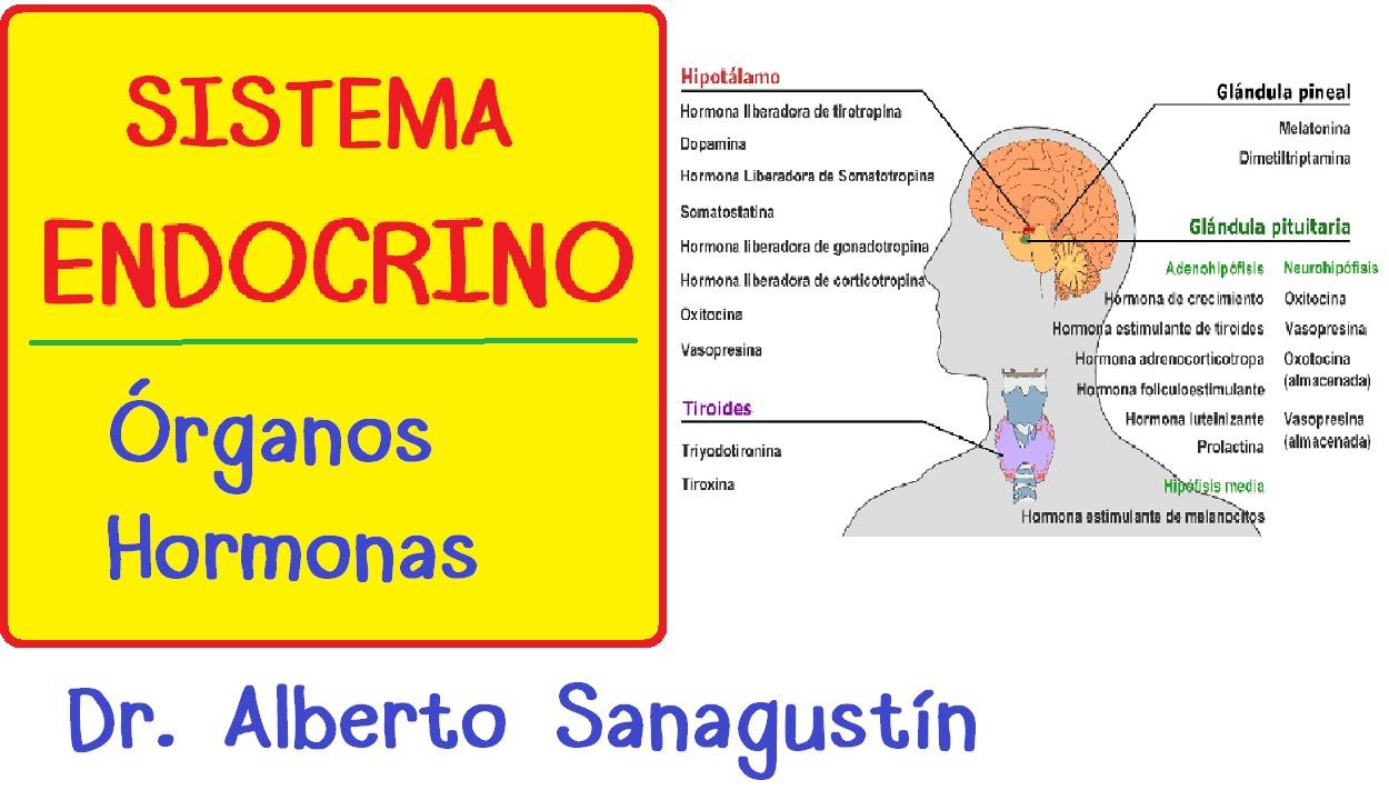 SISTEMA ENDOCRINO explicado FÁCIL: glándulas y hormonas - YouTube